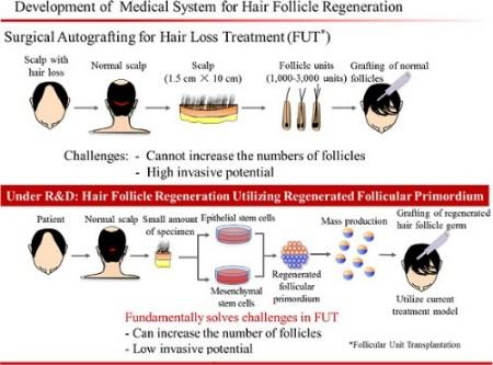 Tsuji, RIKEN and Kyocera hair regeneration method