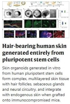 Pluripotent Stem Cells Hair Growth
